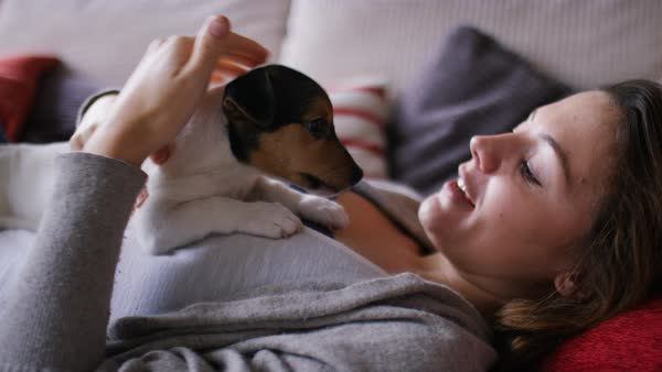 Young woman stroking and cuddling her puppy, in slow motion Royalty-free stock video