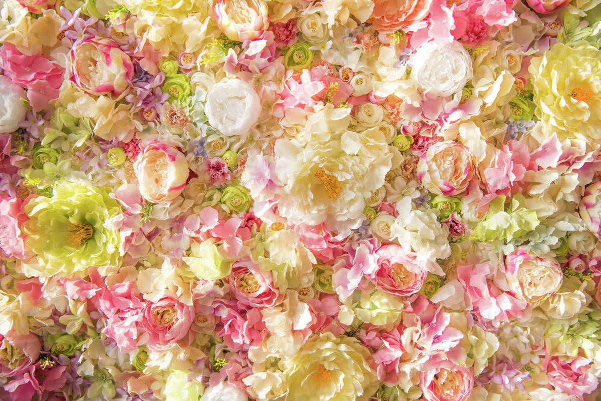 Beautiful Floral Background With Tender Elegant Flowers Stock