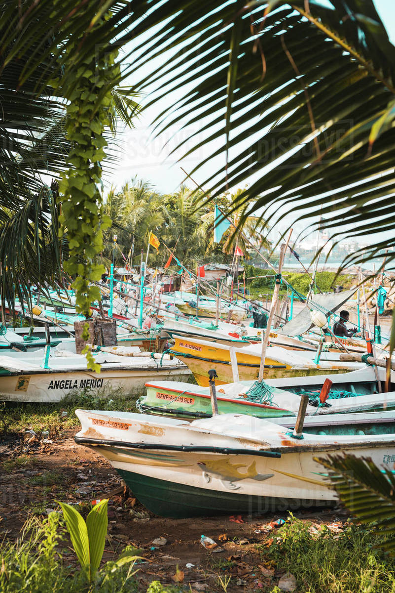The fishing boats at Galle, Sri Lanka, Asia Rights-managed stock photo