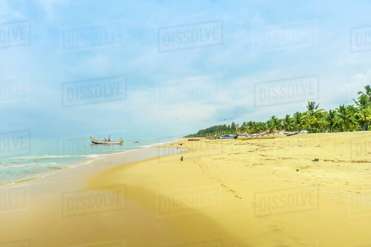 Golden sands, palm trees and ubiquitous house crows on popular Marari Beach, Mararikulam, Alappuzha (Alleppey), Kerala, India, Asia Royalty-free stock photo