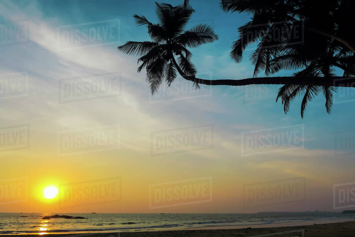 Leaning palm trees at sunset on lovely unspoilt Kizhunna Beach, south of Kannur on the state's North coast, Kannur, Kerala, India, Asia Royalty-free stock photo