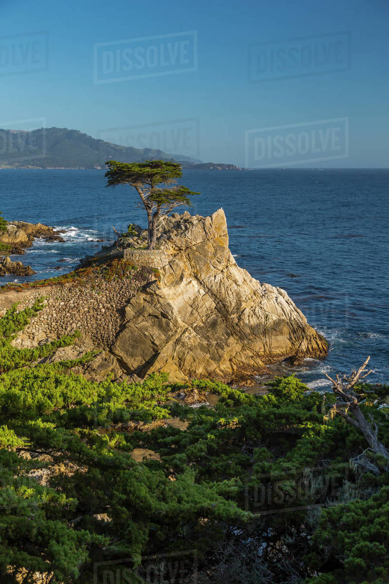 View Of Carmel Bay And Lone Cypress At Pebble Beach 17 Mile Drive Peninsula Monterey California United States America North
