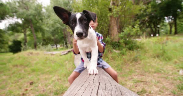 Cute black and white coloured puppy and mischievous boy with scratches in his face looking at camera in nature, park or garden Royalty-free stock video
