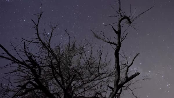 Night sky timelapse of stars and milky way with silhouette trees in the foreground Royalty-free stock video