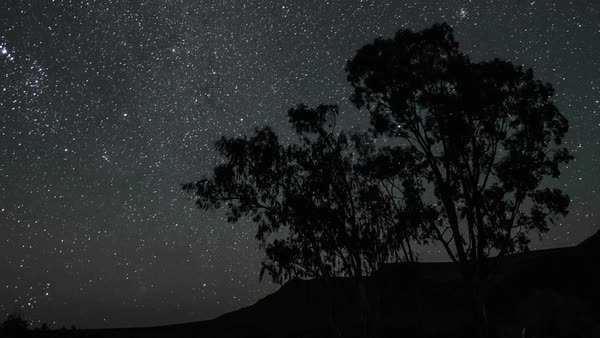 Night sky timelapse of stars and milky way with silhouette trees in the foreground, fade into dawn Royalty-free stock video