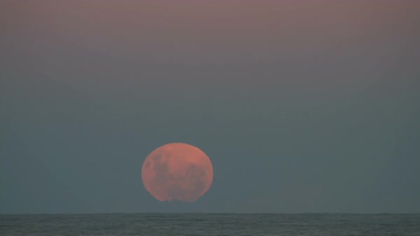 Timelapse of super moon close up rising over sea in night sky Royalty-free stock video