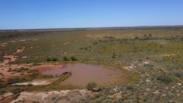 Wild Horses drinking from waterhole, aerial view Royalty-free stock video