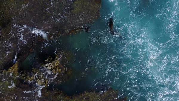 Group of seals swimming in water seen from aerial view Royalty-free stock video