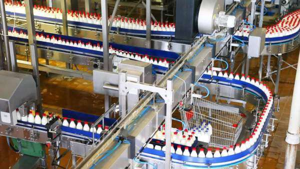 bottles of milk move long conveyor first in one, then many ranks ...