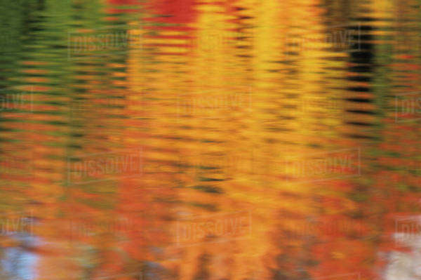 USA, Massachusetts, Acton. Reflection of autumn foliage in pond with ripples Royalty-free stock photo