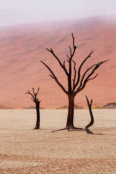 Namibia, Namib-Naukluft Park, Deadvlei. Unusual rainy weather conditions in early morning. Royalty-free stock photo