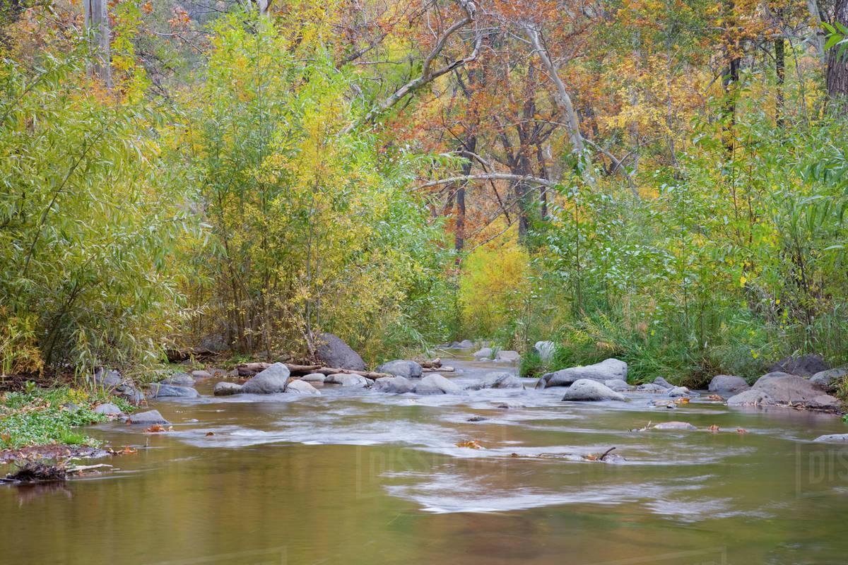 AZ, Arizona, Oak Creek Canyon, Oak Creek and trees with fall color ...