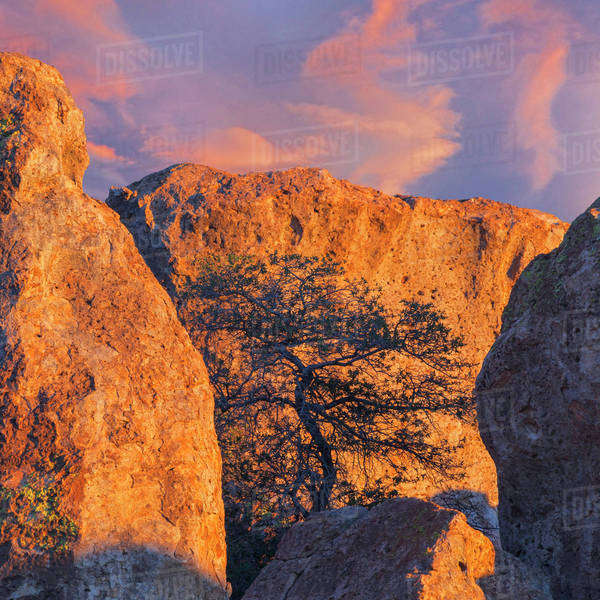 USA, New Mexico, City of Rocks State Park. Sunset on boulders and tree. Royalty-free stock photo