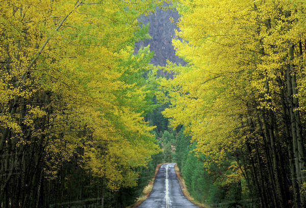 NA, USA, Washington, near White Pass. Teaton River Road with trees in fall color Royalty-free stock photo