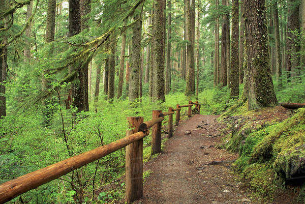 WA, Olympic National Park, Sol Duc Valley, rainforest with trail Royalty-free stock photo