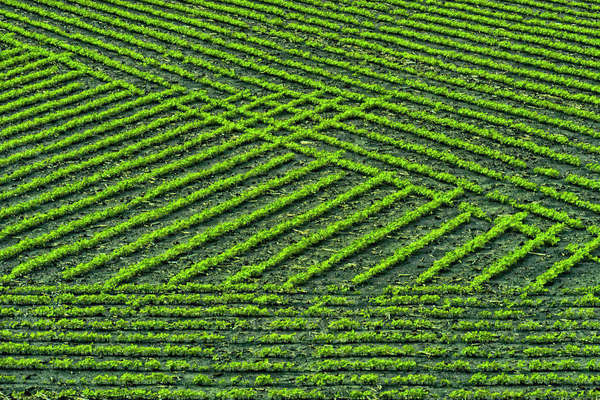 Mid-north Indiana. Field patterns formed by crops. Royalty-free stock photo