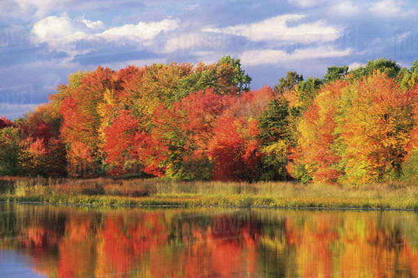 USA, Massachusetts, Acton. Reflection of autumn foliage and clouds in pond Royalty-free stock photo