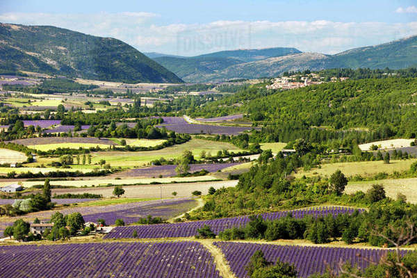 Patchwork of Farmer's fields in valley below Sault, Provence, France. Rights-managed stock photo