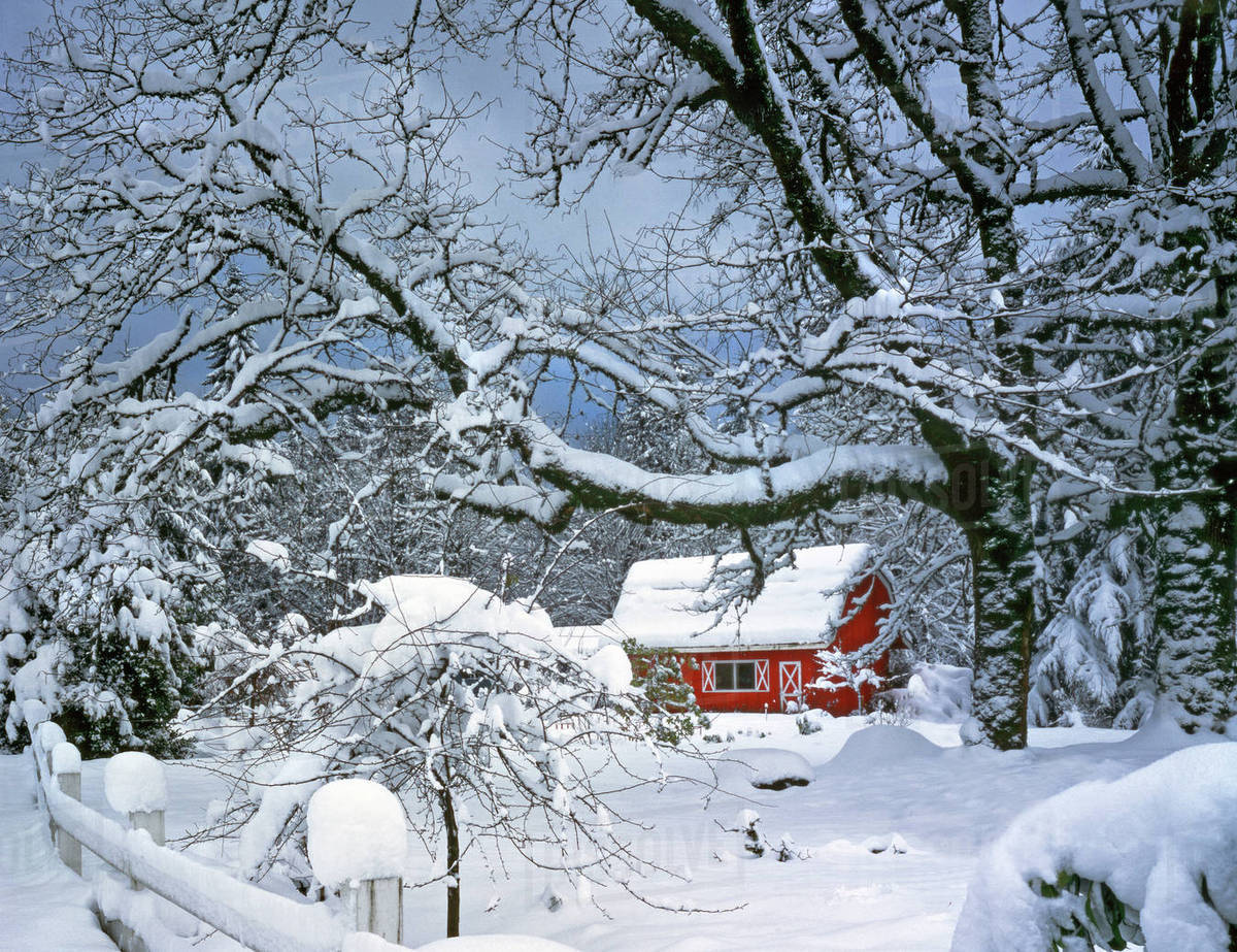 Usa Oregon Clackamas County Fresh Snow Covers Landscape And Red Barn Stock Photo Dissolve