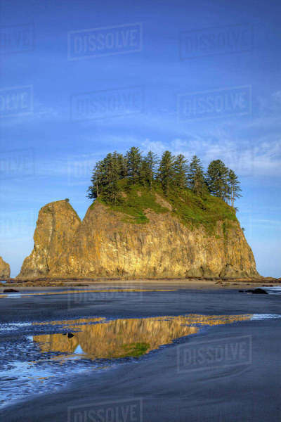Second Beach, Seastacks at low tide, Olympic National Park, Washington, USA Rights-managed stock photo