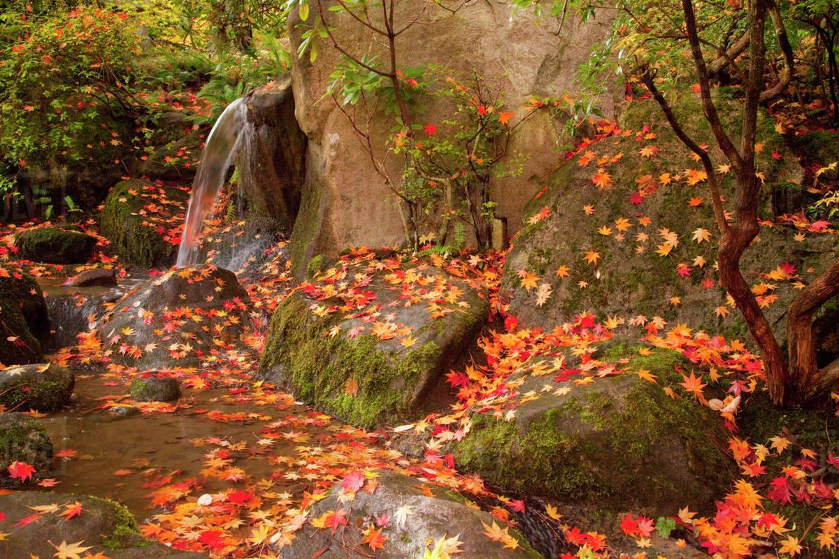 Amazing Waterfall Garden Park Seattle Mold - Brown Nature Garden ...