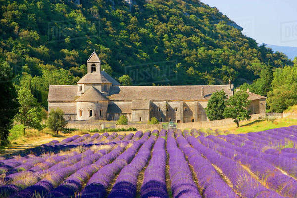 France, Gordes. Cistercian monastery of Senanque beside lavender field in the Provence Region. Rights-managed stock photo