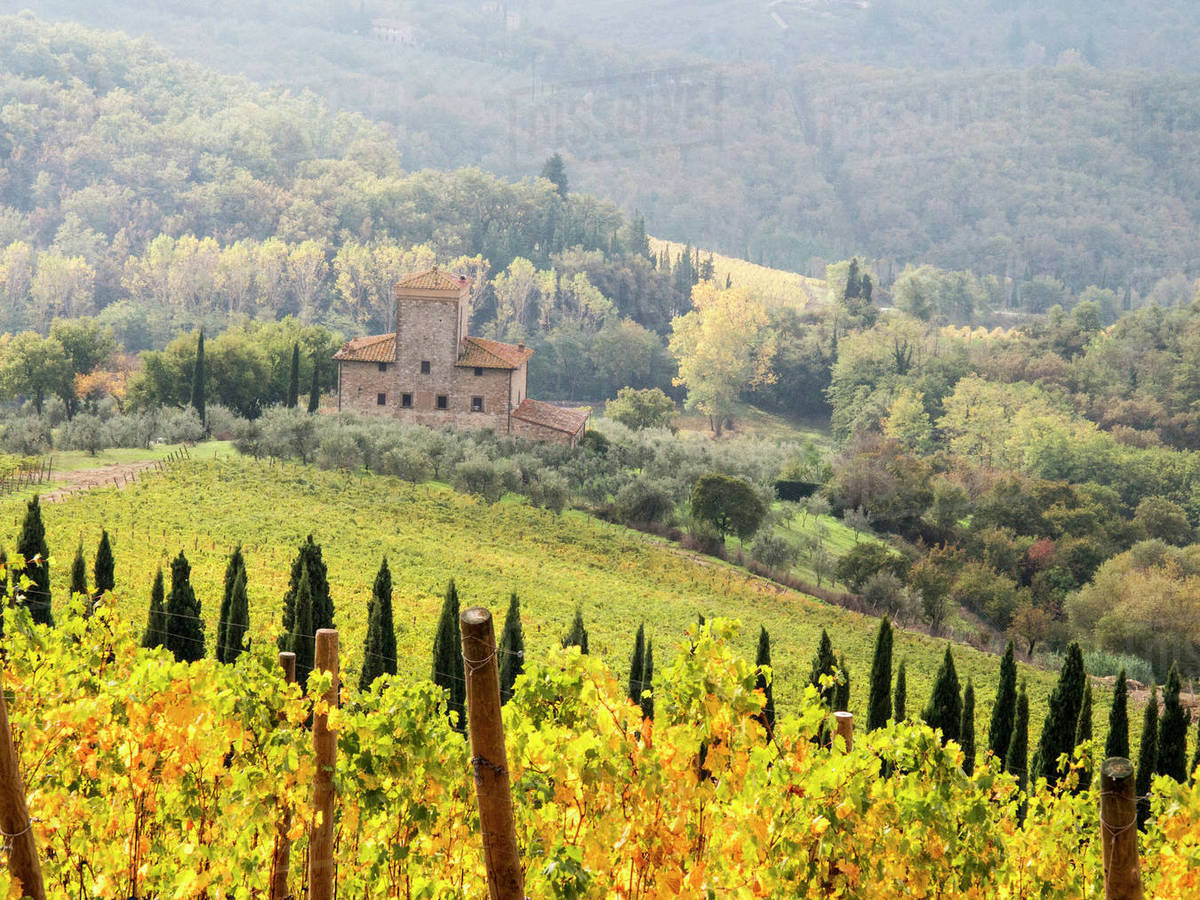 Europe, Italy, Tuscany  Vineyard in autumn in the Chianti region of  Tuscany  stock photo