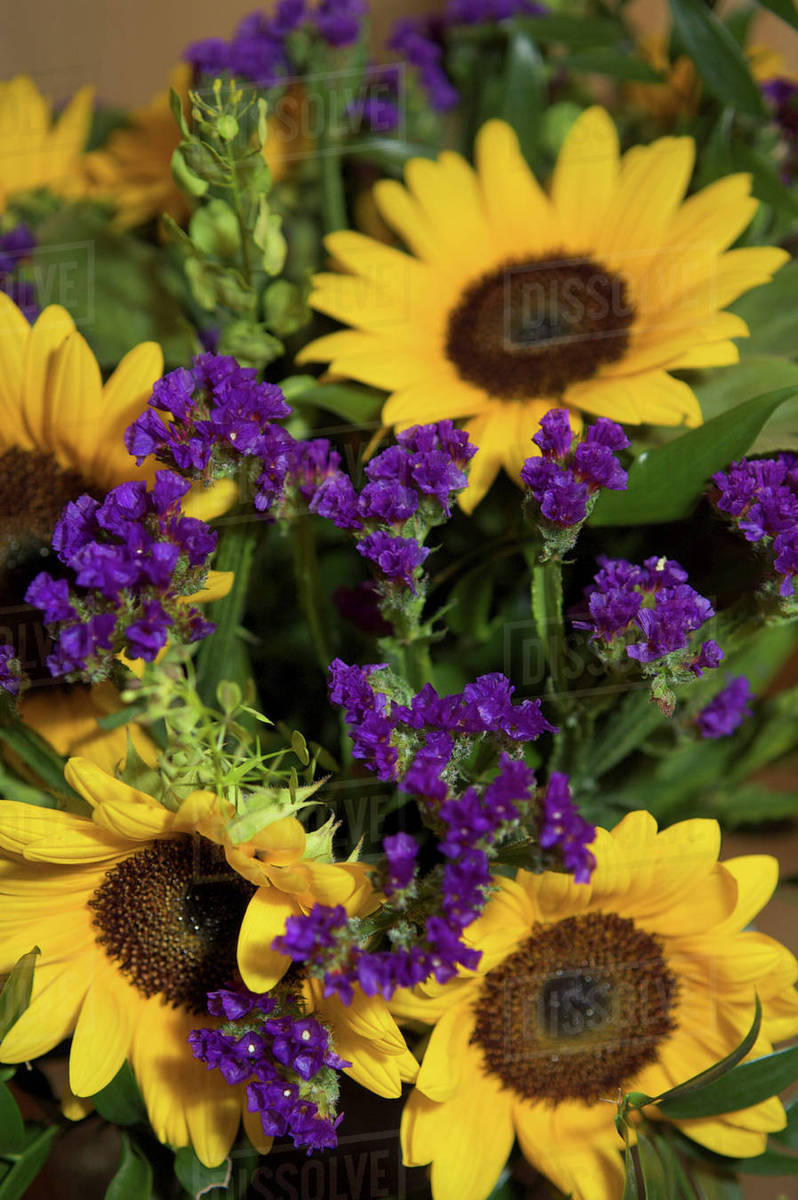 Close Up Of Bridal Flower Arrangement Sunflowers And Purple Statice
