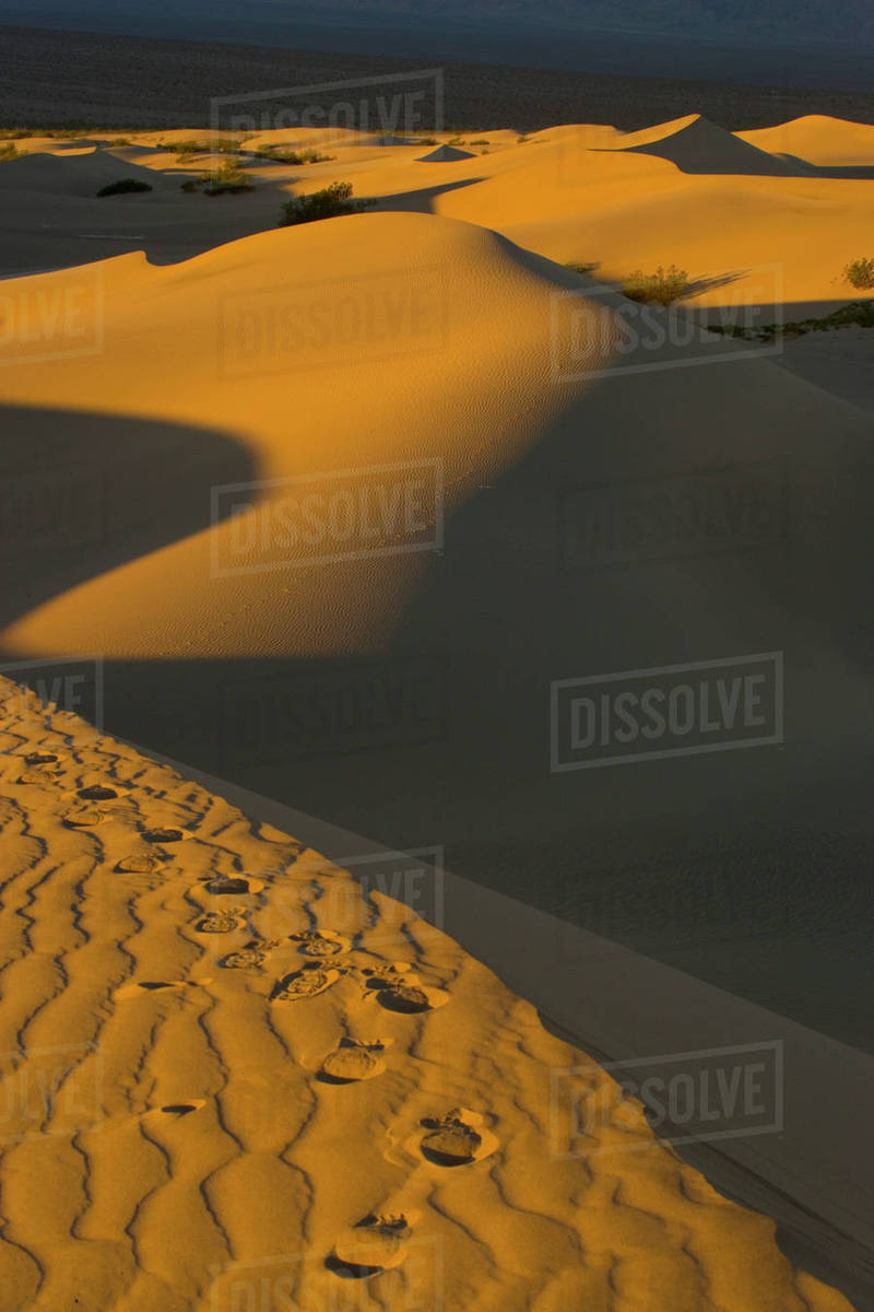 Sand Dunes and ripple desgins from the early morning light falling on the  Dunes Mesquite Flats near Stove Pipe Wells area Death Valley N P ,