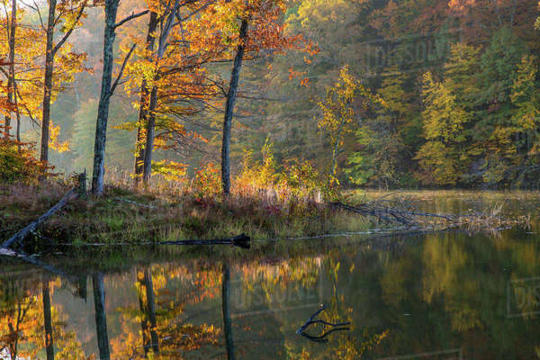 Backlit trees on Lake Ogle in autumn in Brown County State Park, Indiana, USA Rights-managed stock photo