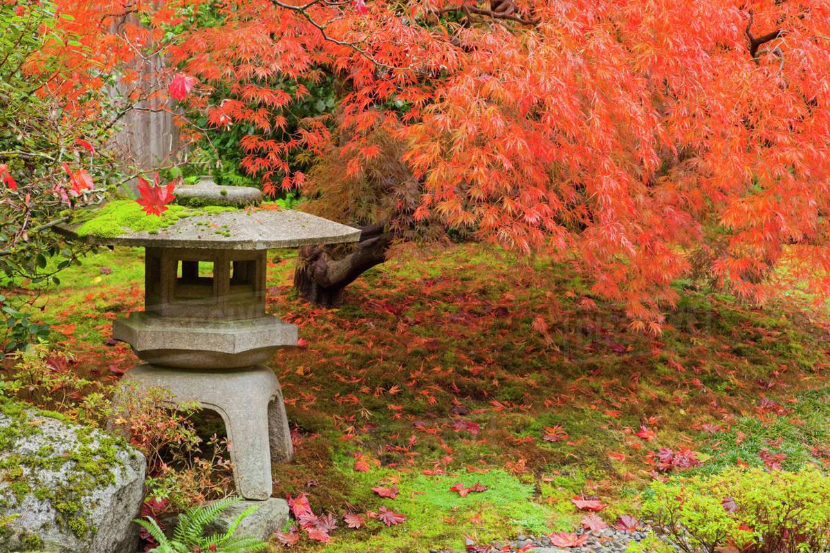 WA, Seattle, Washington Park Arboretum, Japanese Garden, with autumn ...