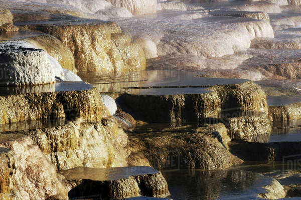 Terraces, Mammoth Hot Springs, Yellowstone National Park, Wyoming, USA Rights-managed stock photo