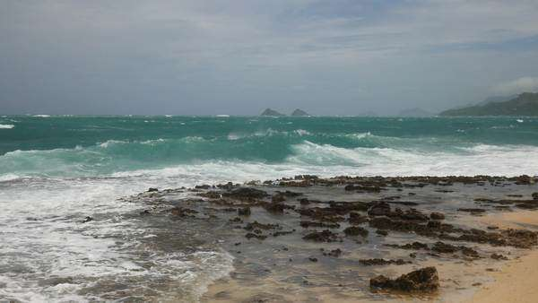 Storm surf, Hurricane Iselle, Kailua, Oahu, Hawaii Rights-managed stock video
