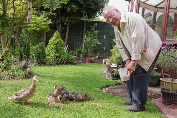 Senior man feeding ducks in garden Royalty-free stock photo