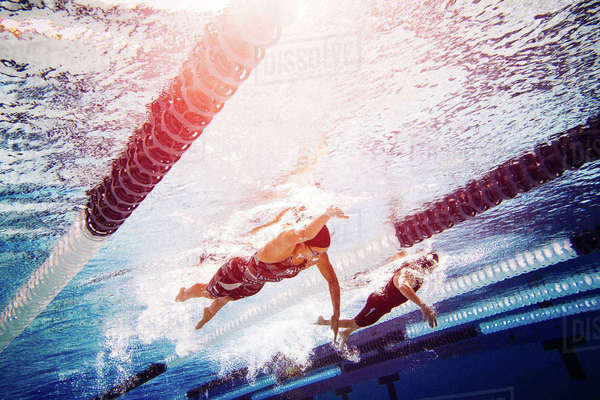 Swimmers doing freestyle in lane Royalty-free stock photo