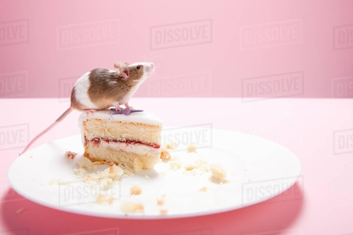 Mouse and slice of cake on plate & Mouse and slice of cake on plate - Stock Photo - Dissolve
