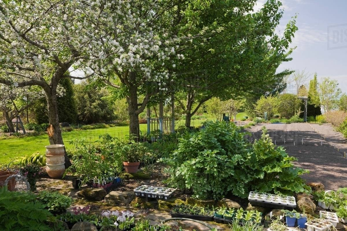 Young Plants And Seedlings Beneath A White Flowering Apple Tree