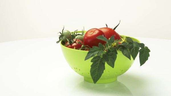 Ripe & unripe tomatoes with stem, leaves & flowers in colander Royalty-free stock video