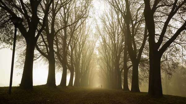 Timelapse: people running in a foggy country road Royalty-free stock video