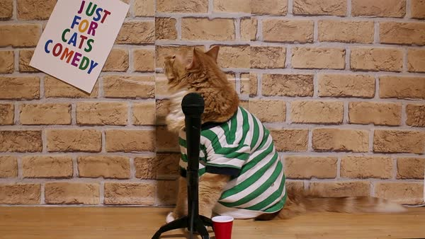 Stand-up comedy cat finishes his set and leaves the stage at the comedy club Royalty-free stock video