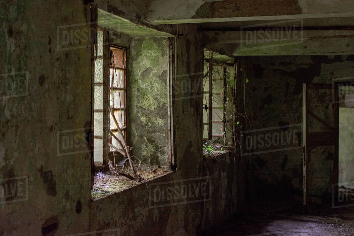 Old abandoned factory house windows in decay with broken glass and plant that grow inside Royalty-free stock photo