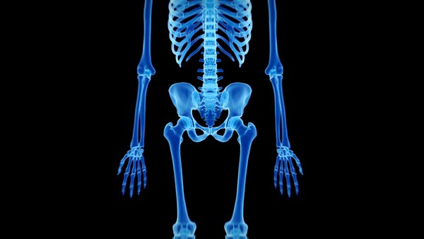 human skeletal system, animation. - stock video footage - dissolve, Skeleton