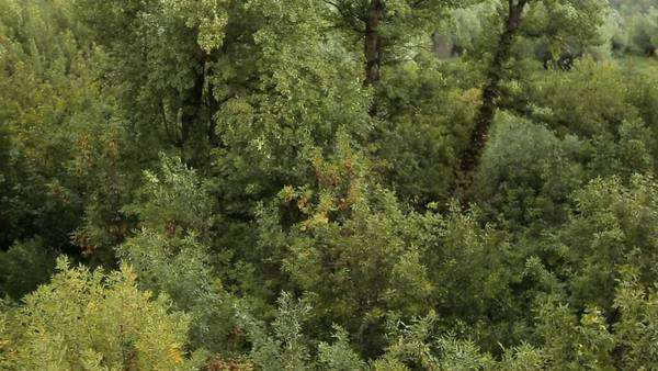 Aerial view of treetops. Royalty-free stock video