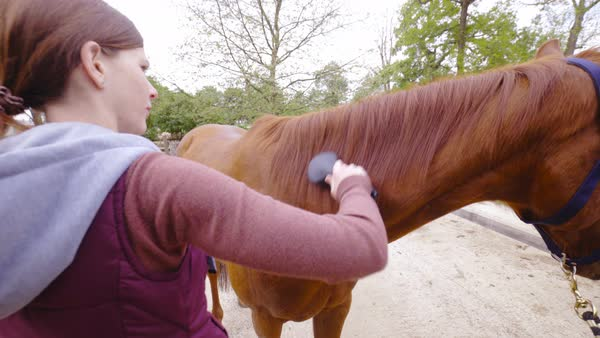 Image result for brushing a horse's mane