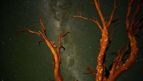 Timelapse through a dead Acacia Tree in the Kalahari bushveld, South Africa, shooting towards the Milky Way, until washed out at sunrise Royalty-free stock video