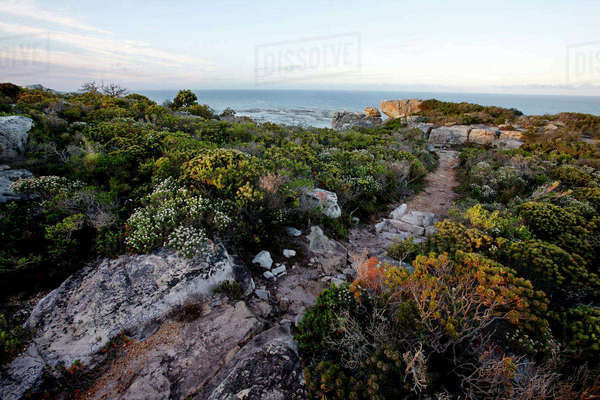 Cape Peninsula National Park Rights-managed stock photo