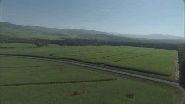 Aerial view of green fields Rights-managed stock video