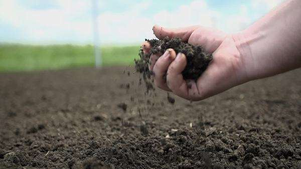 Detail shot of gardener checking the quality of the soil in his garden Royalty-free stock video