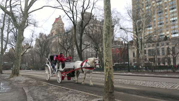 Horse drawn carriages move through Central Park in New York city. Royalty-free stock video