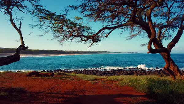 Aerial shot through trees to reveal the Molokai Hawaii coastline. Royalty-free stock video